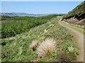 NR7775 : Hill track by Patrick Mackie