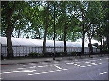 TQ2977 : Marque in Pimlico Gardens by PAUL FARMER