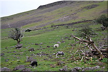 NY1807 : Sheep grazing, Wasdale by N Chadwick
