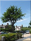 TQ1977 : An interesting tree in the public car park of the National Archives, Kew by Chris Reynolds