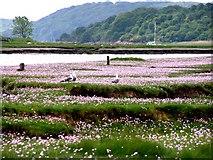 NX8356 : Gulls in the pink by Ed Iglehart