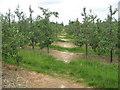 TQ7140 : Footpath in Plum Orchard by David Anstiss