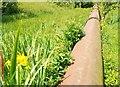 J3370 : The Lagan Meadows walk, Belfast (10) by Albert Bridge