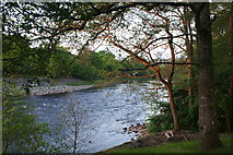 NN9357 : Trees & Tummel by Andrew Wood