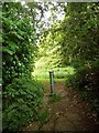 SZ0795 : East Howe: entering Puck's Dell from footpath E37 by Chris Downer