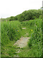 TG3205 : The Ted Ellis Nature Reserve - path through Old Mill Marsh by Evelyn Simak