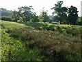 ST9467 : Meadow below Foxbury Wood (7) by Derek Harper