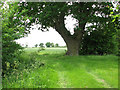 TM3795 : Oak tree growing at the corner of a field by Evelyn Simak