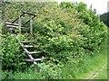 ST9015 : High seat, Stubhampton Bottom by Maigheach-gheal