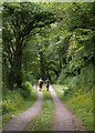 SY1688 : Path at Dunscombe by Derek Harper