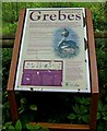 SO8577 : Grebes at Hurcott Pool information board by P L Chadwick