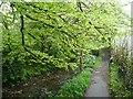 SX1083 : Riverside footpath, Camelford by Humphrey Bolton