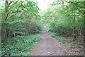 TQ5951 : Bridleway, Dene Park (5) by N Chadwick
