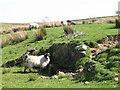 NY6065 : Spring near High House Farm by Mike Quinn