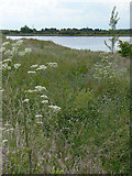 SK5031 : Gravel pit off Pasture Lane by Alan Murray-Rust