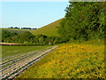 SU0122 : Field/woodland edge 2 by Jonathan Billinger
