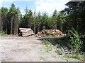 C4846 : Forestry, Drumdoo by Kenneth  Allen