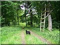ST8916 : High seat, Fontmell Woods by Maigheach-gheal