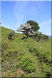 NM4339 : Ulva path by Colin Kinnear