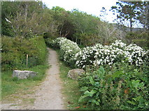 NF7828 : Path from Parking Area by Barbara Carr