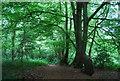TQ5942 : Barnett's Wood by N Chadwick