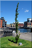 J3475 : Tree, Clarendon Dock by Rossographer
