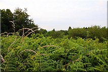SP4802 : Overgrown view from Jarn Mound by Steve Daniels