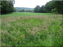 SE1613 : Open land in Royd House Wood by Chris Wimbush