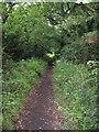 SJ3378 : Bridleway near Willaston by David Quinn