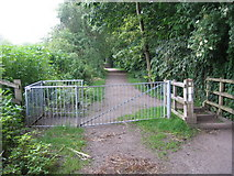 SJ8093 : Trans Pennine Trail by david newton