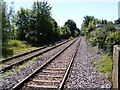 TM3877 : Along the tracks at Halesworth Railway Station by Adrian Cable