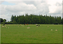 S8666 : Pasture near Altamont, Co. Carlow by Dylan Moore