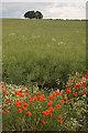 SE9245 : Money Hill, Kiplingcotes by Paul Harrop