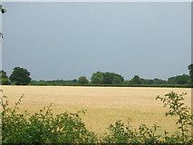 TF1202 : Arable farmland just after a heavy shower by geojoc