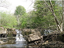 NY9038 : Waterfalls on Middlehope Burn (3) by Mike Quinn