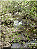NY9038 : Waterfalls on Middlehope Burn (5) by Mike Quinn