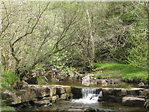 NY9038 : Small waterfall on Middlehope Burn (2) by Mike Quinn
