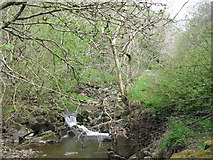 NY9038 : Small waterfall on Middlehope Burn (3) by Mike Quinn