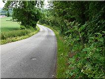 TQ5959 : Down hill, Exedown Road by Chris Gunns