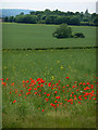 TQ5959 : Field with poppies by Chris Gunns