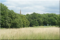 TQ1450 : Ranmore Common, Surrey by Peter Trimming