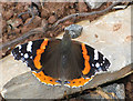 SO7013 : Red Admiral on a stone by Pauline E