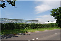 TG1807 : Glasshouses, John Innes Institute, Norwich Research Park by N Chadwick