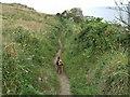 SW7919 : Coastal path by Steve Carter