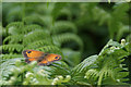 SJ5298 : A gatekeeper butterfly at Carr Mill Dam by Ian Greig