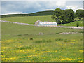 NY7005 : Field of buttercups by Stephen Craven