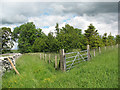 NY7004 : Bridleway and plantation by Stephen Craven