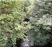 SJ9398 : River Tame by Gerald England