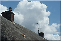 SU7037 : Cat on a hot Thatched Roof by Peter Trimming