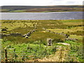 SE0331 : Stone walls near Fly by Alexander P Kapp